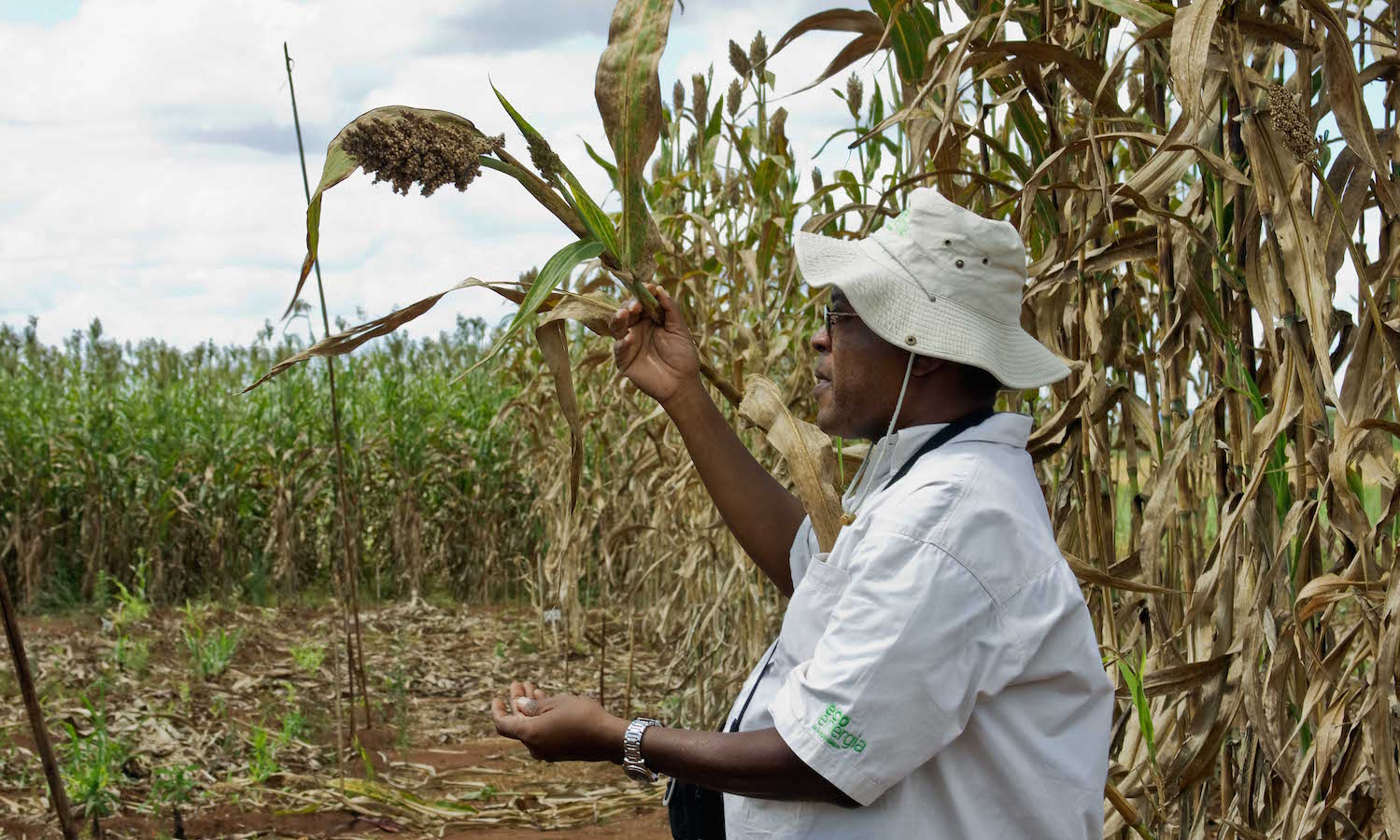 Crop breeders use innovative technologies to fight the threat of hunger and malnutrition in the developing world.