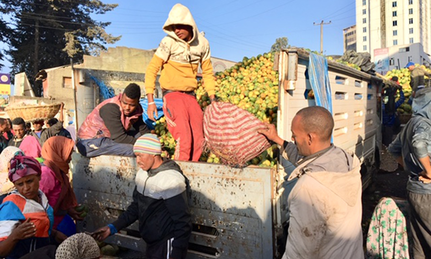 Food refrigeration in Ethiopia is mostly for exports, not feeding its own (Photograph courtesy of Peyton Fleming)