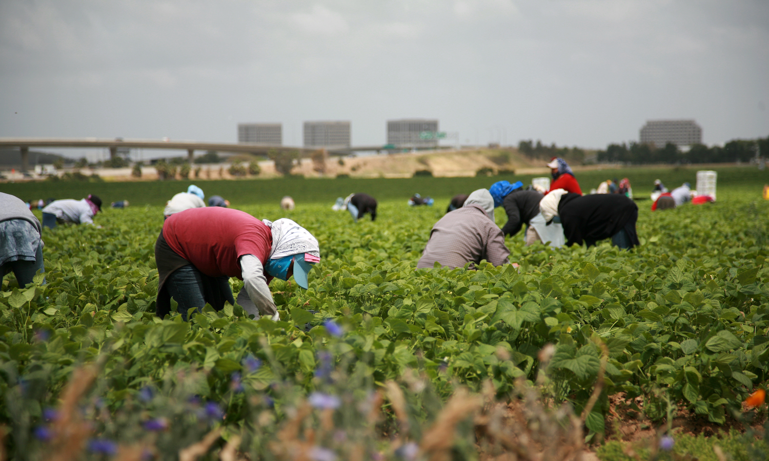 Undocumented farm workers could have a path to citizenship with the reintroduction of the Agricultural Worker Program Act.