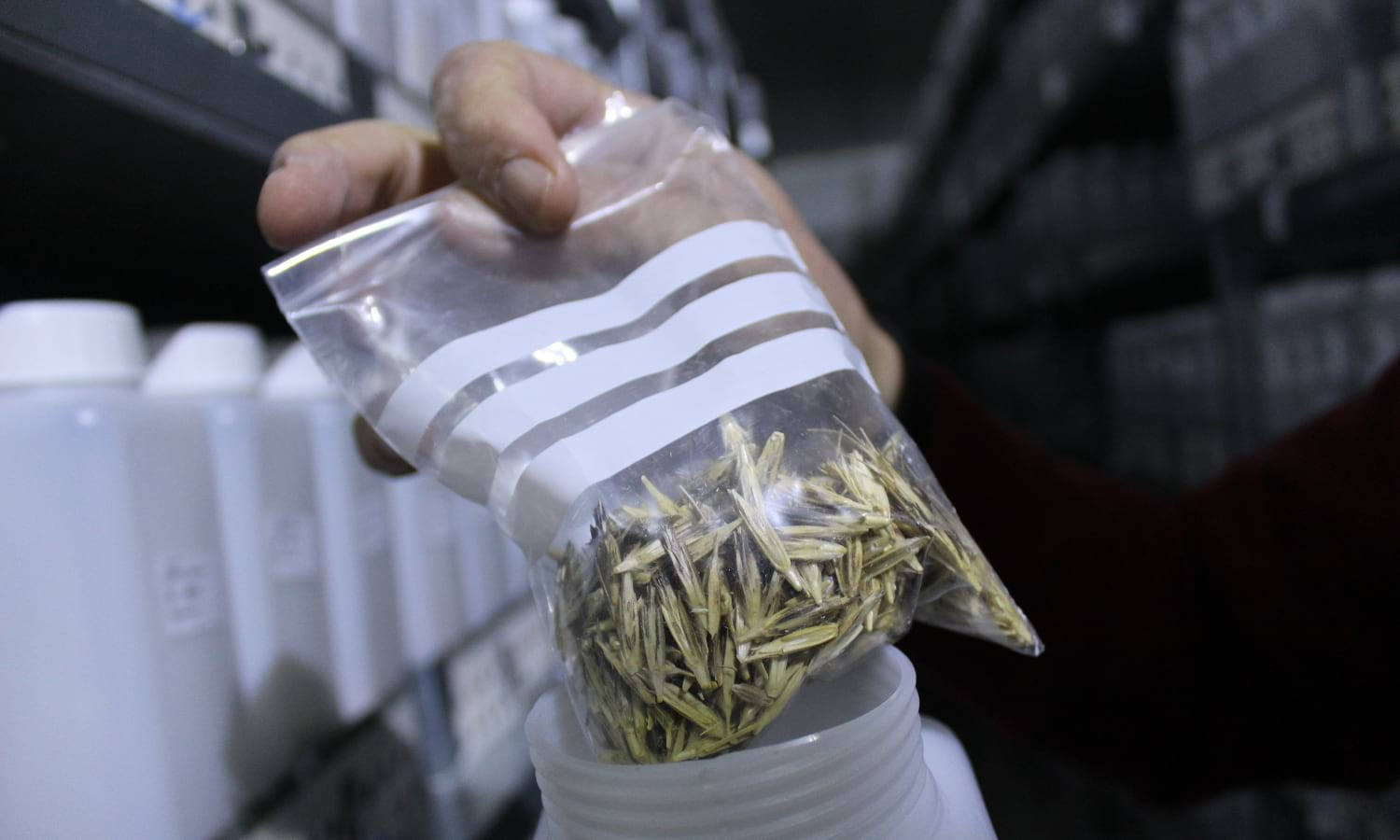A genebank in Syria is working to keep seed diversity alive by saving over 100,000 varieties of seeds during a time of conflict.