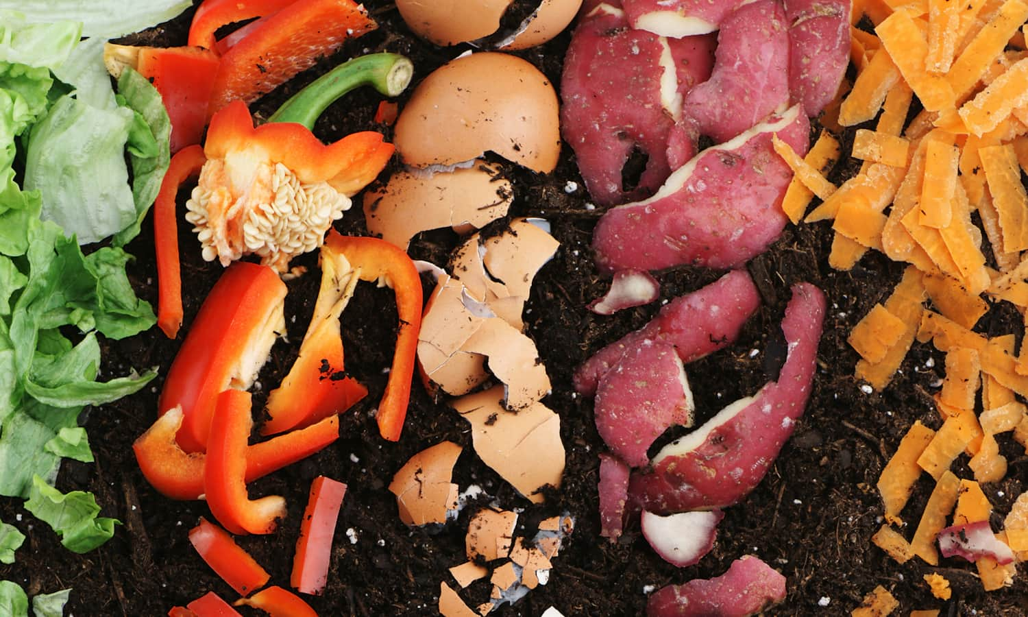 Small scale composting helps build community, improve local soil, and can save cities up to US$250,000 a year.