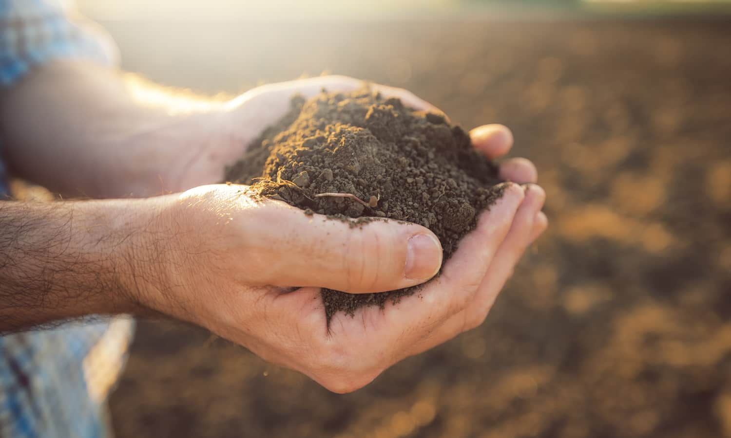 Soil carbon sequestration is becoming a topic for farmers and politicians alike—but which conversations will distinguish sustainability from trend?