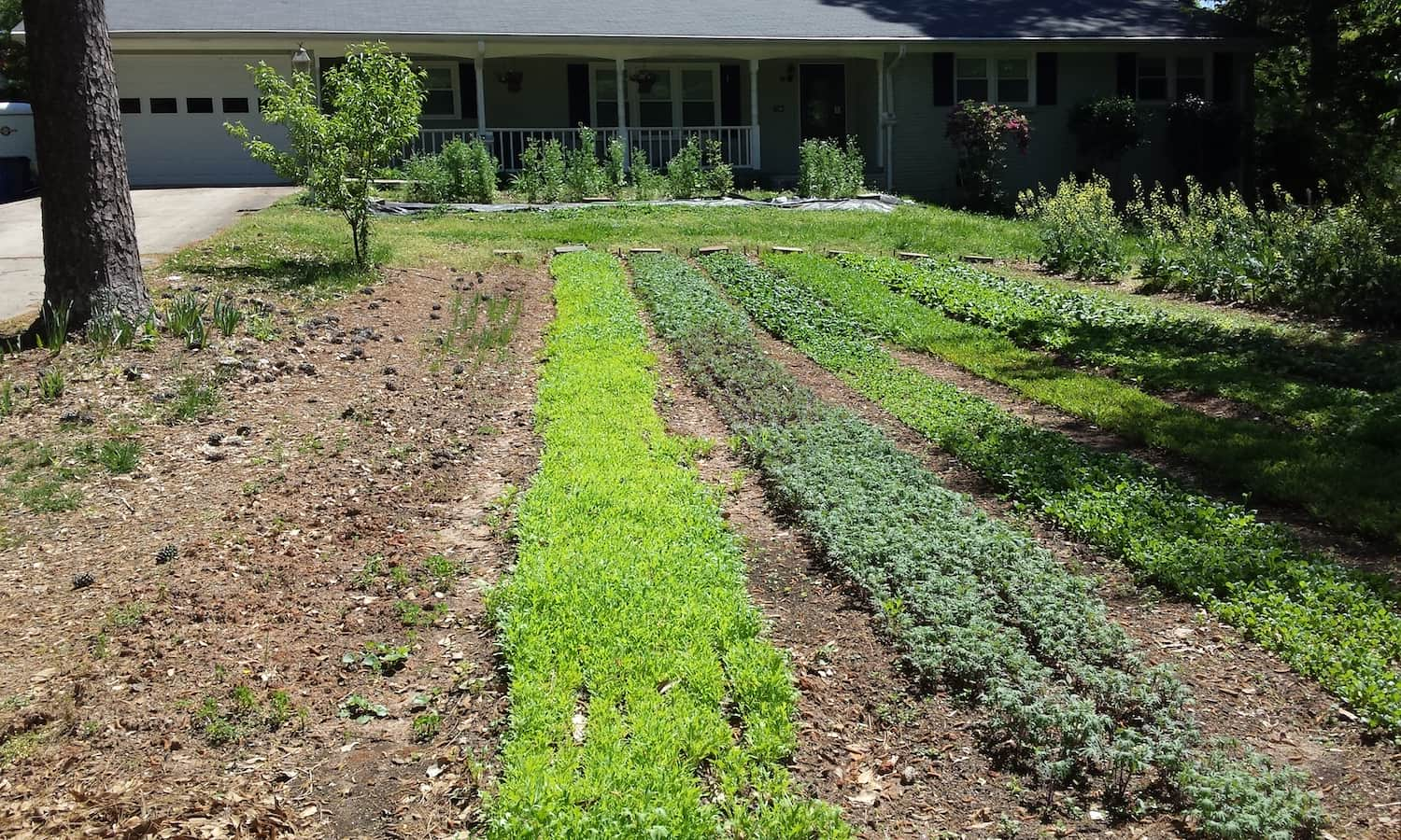 As a multi-locational market garden, Grow with the Flow presents its successful business model and how the community stepped up to support a hyper-local food source for the City of Tucker, Georgia.
