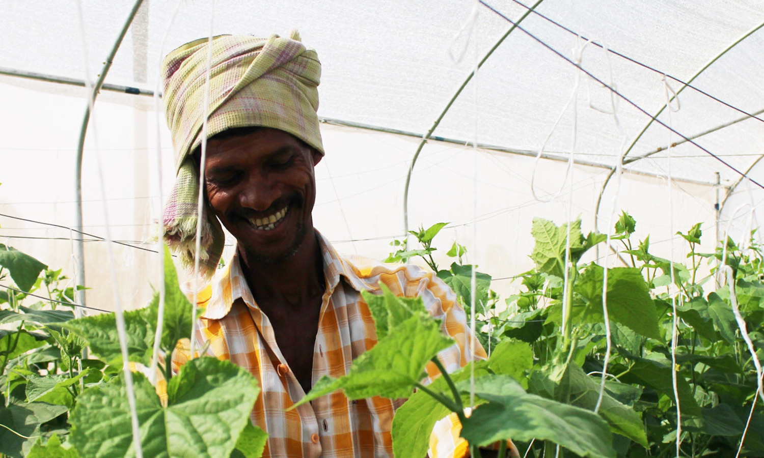 Nonprofit Kheyti is making greenhouse agriculture accessible to smallholder farmers in India