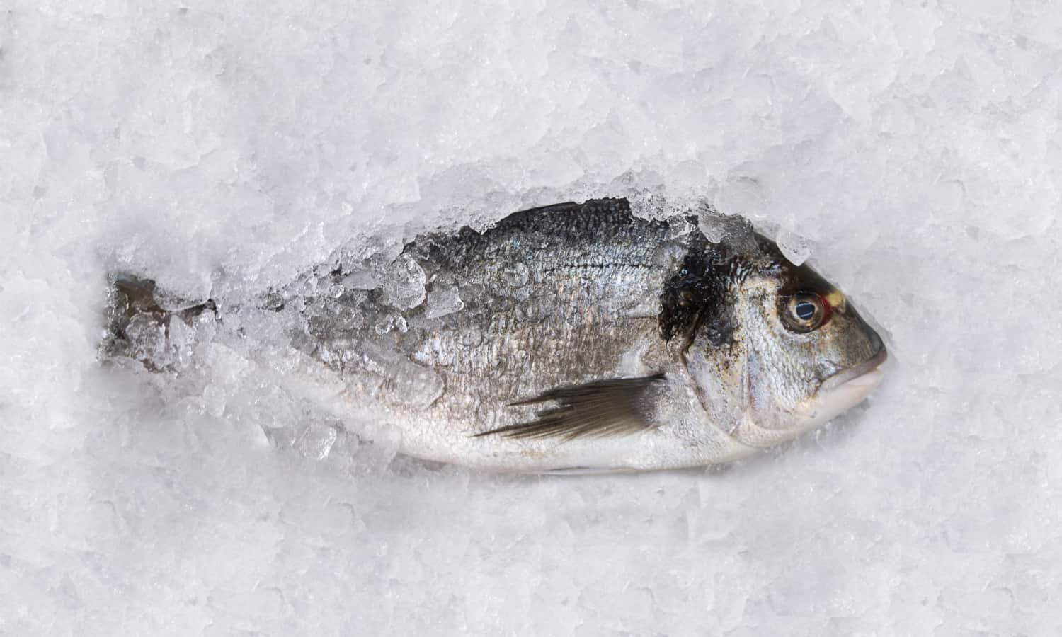 Creating a sustainable food system that contains fish is possible, but requires us to look beyond the fillet. Chef Josh Niland from the Australian restaurant Saint Peter talks about how it can be done.
