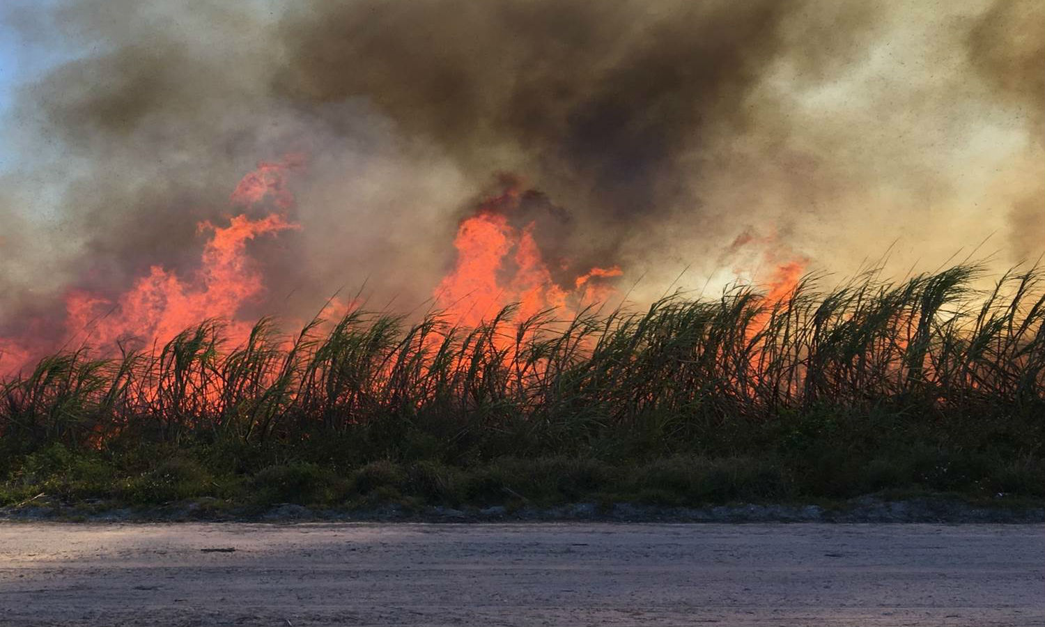 Florida sugar faces growing pressures from a pending lawsuit and environmental activists for outdated preharvest practice of sugar field burning.