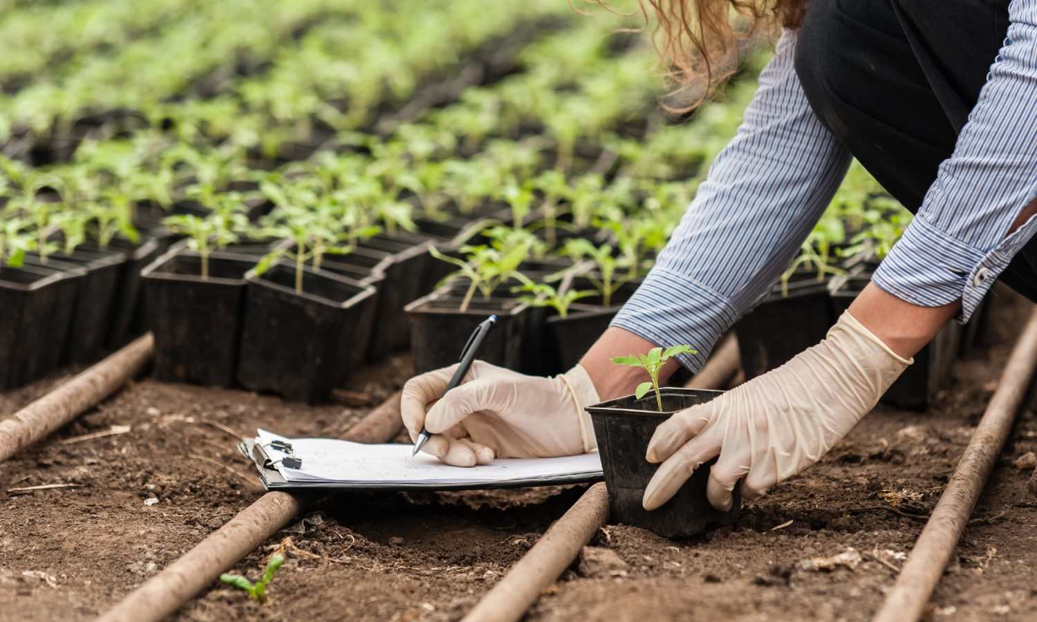 This World Soil Day, Food Tank is recognizing that healthy soil is important for more than just crops — soil can also trap carbon and combat climate change.