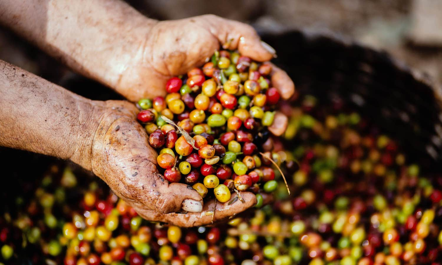 Coffee is facing a sustainability crisis. A Global Coffee Fund would help, say Jeff Sachs and Kaitlin Cordes, Columbia University.