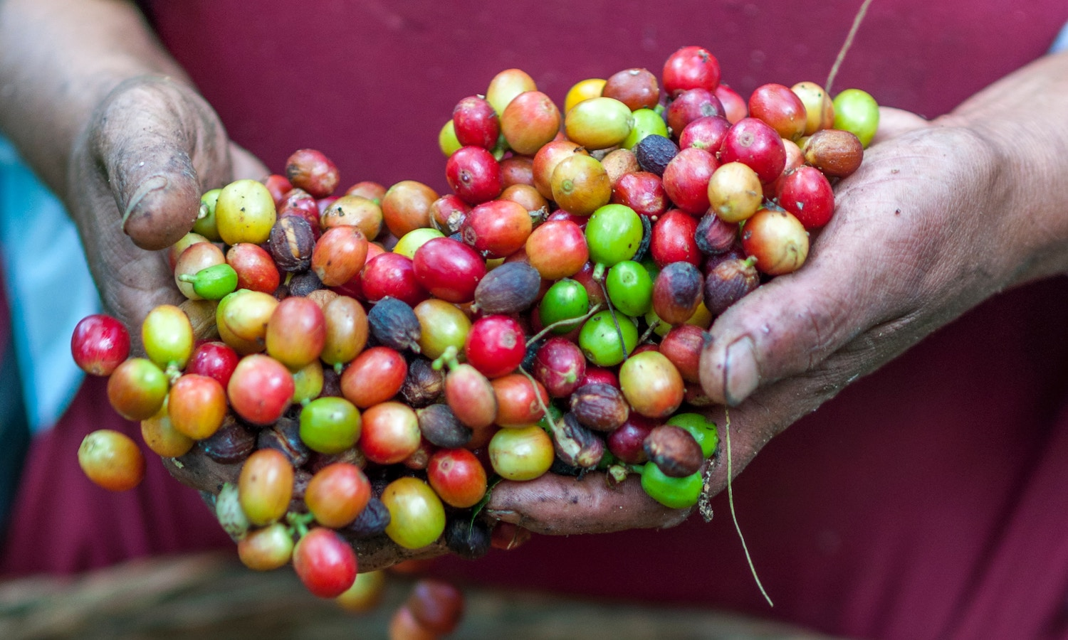 Amelia Nierenberg of the New York Times hosts Matt Swenson, Director of Coffee at Chameleon Cold-Brew, to talk about the tech, standards, and youth that are creating an exciting future for sustainable coffee.