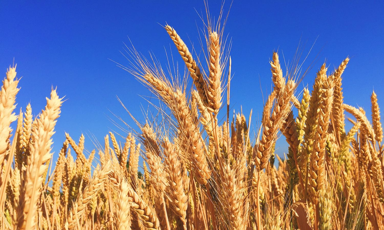 General Mills launches a regenerative wheat farming pilot program in Kansas to train farmers on regenerative practices and encourage 1 million acres to transition by 2030