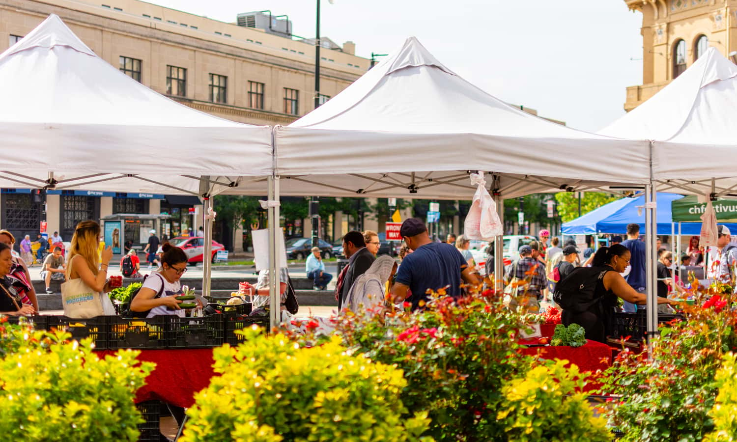 DC Greens Produce Plus program partners with farmers' markets across Washington D.C., using food to address the city's problems with equity in access, affordability, and health