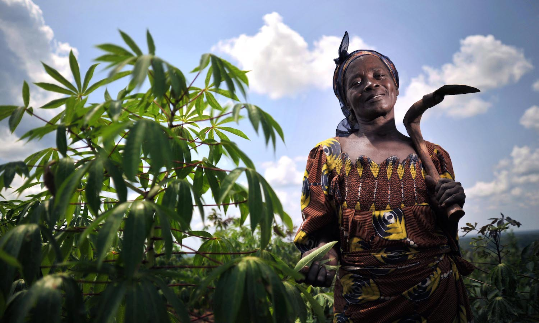 Climate Change Threatens Cassava