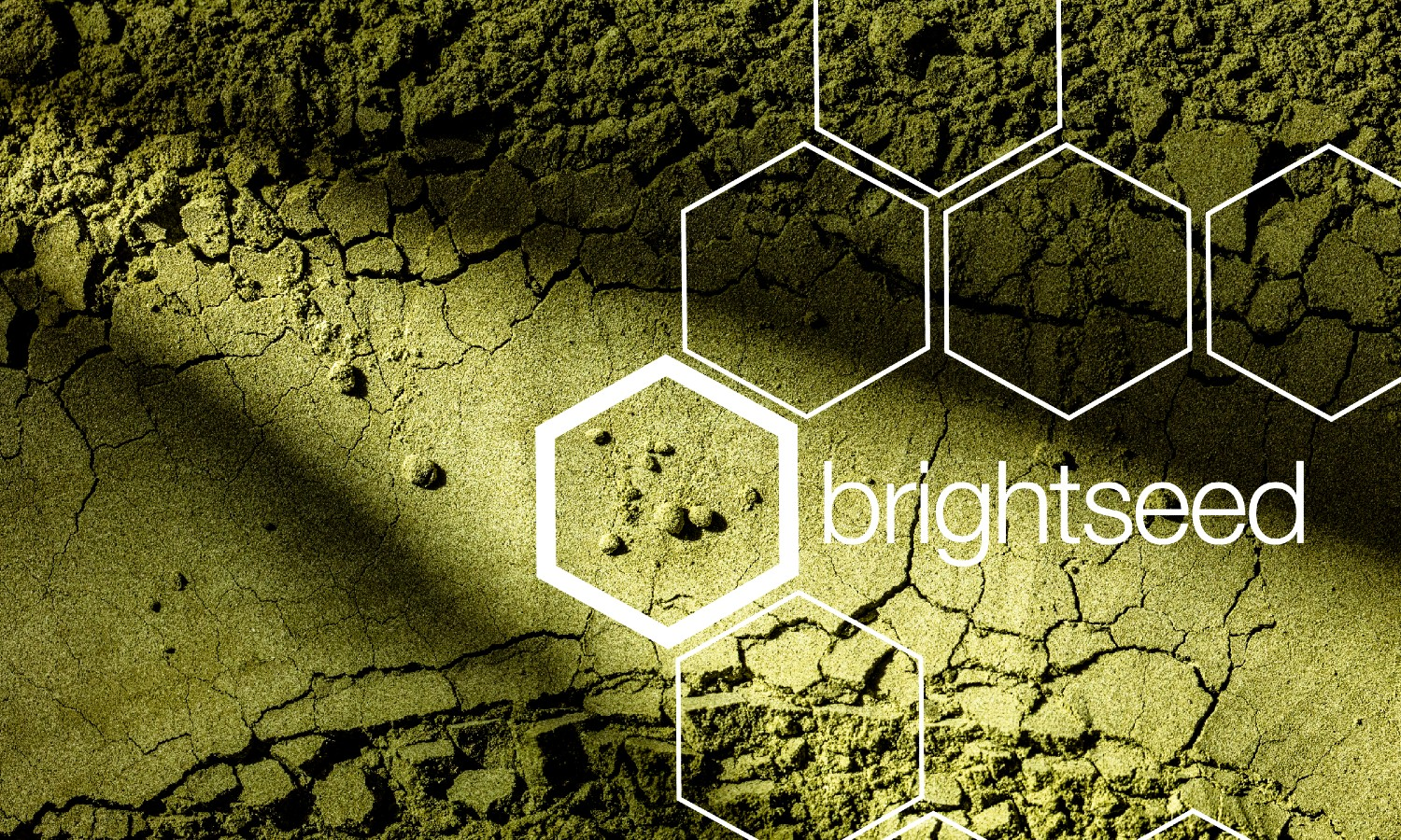 Brightseed will use artificial intelligence to identify unknown compounds in soy and predict previously undiscovered health benefits in plants.