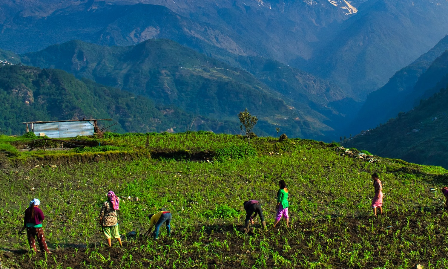 Small scale farms Offer a Model of Resilience