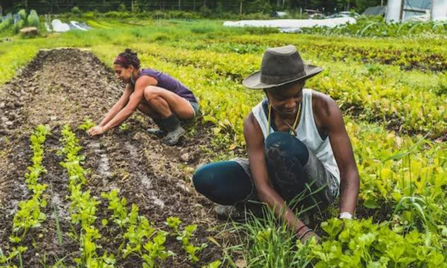 On Juneteenth, a holiday recognizing the end of slavery, A Growing Culture is holding a daylong broadcast to elevate Black voices in the food system.