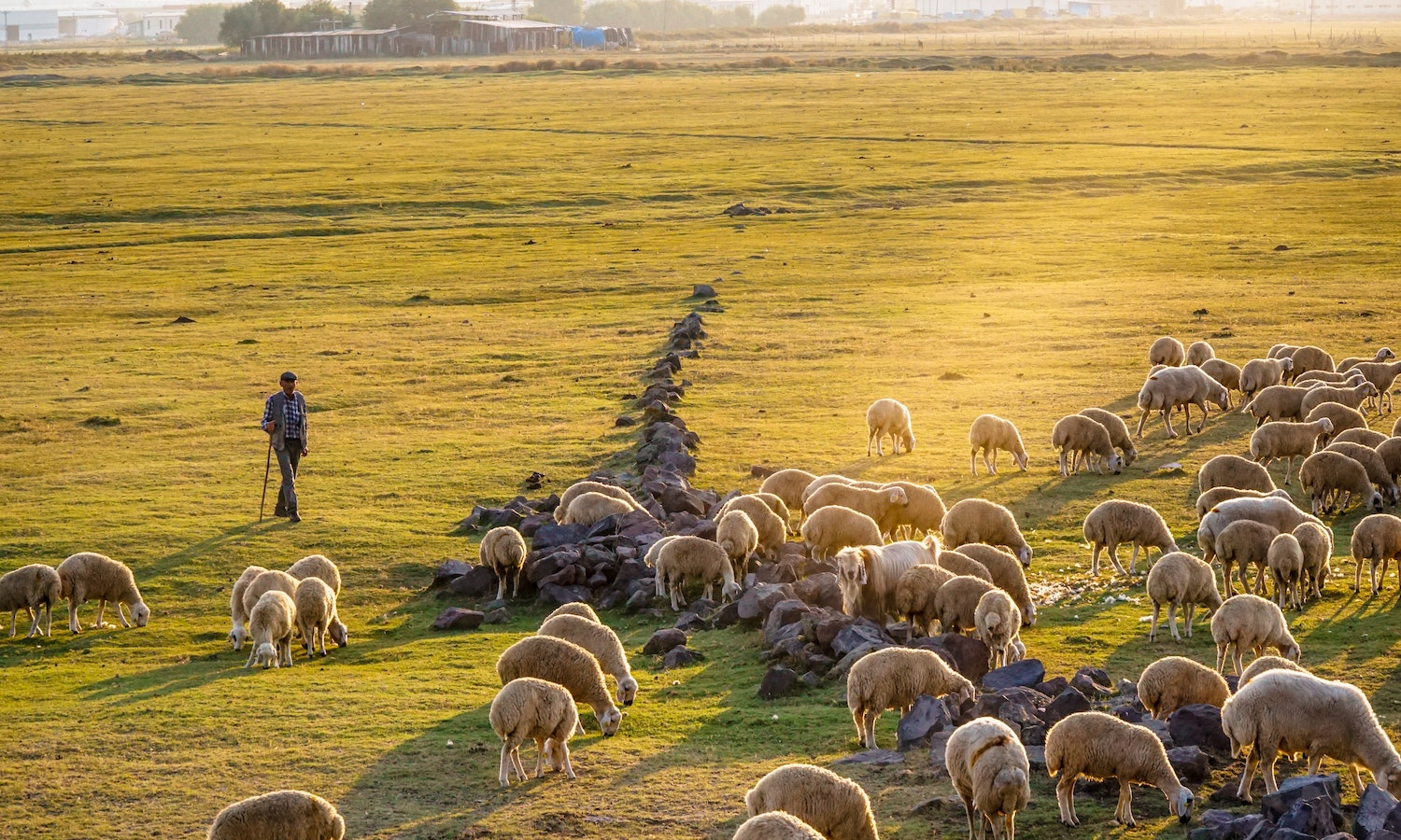 According to EU Agriculture Commissioner Janusz Wojciechowski, the pandemic underscores the critical need for a more sustainable, self-reliant European food system, which the new F2F Strategy is designed to achieve.