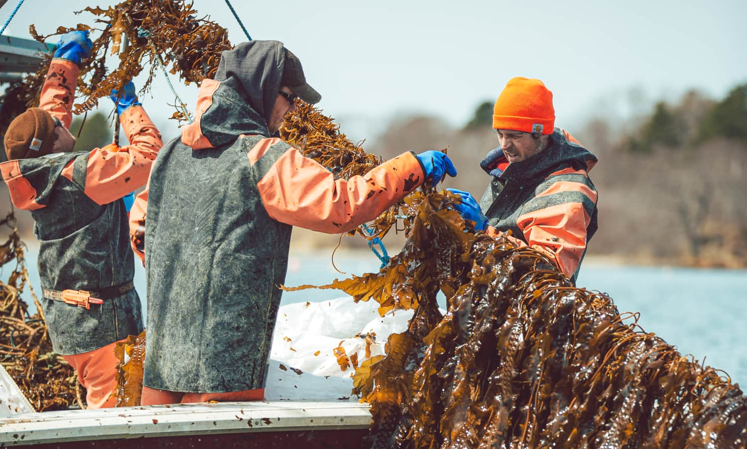 Lobsterers are finding sustainable diverse ways to increase resilience in the face of climate change.