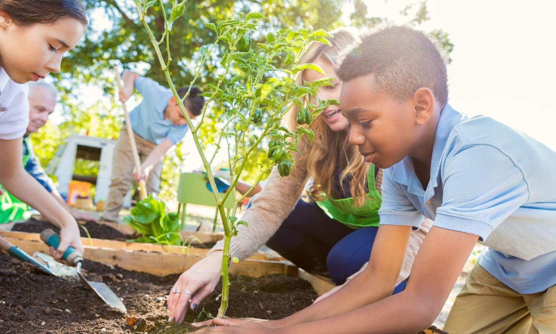 Teachers, Educators, Garden Learning, Hands-On Learning