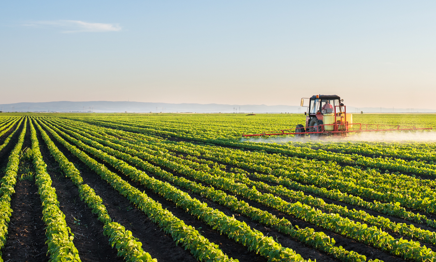 Founded by undergraduates at UC Berkeley, Herbicide-Free Campus works to eliminate synthetic herbicides from schools across America.