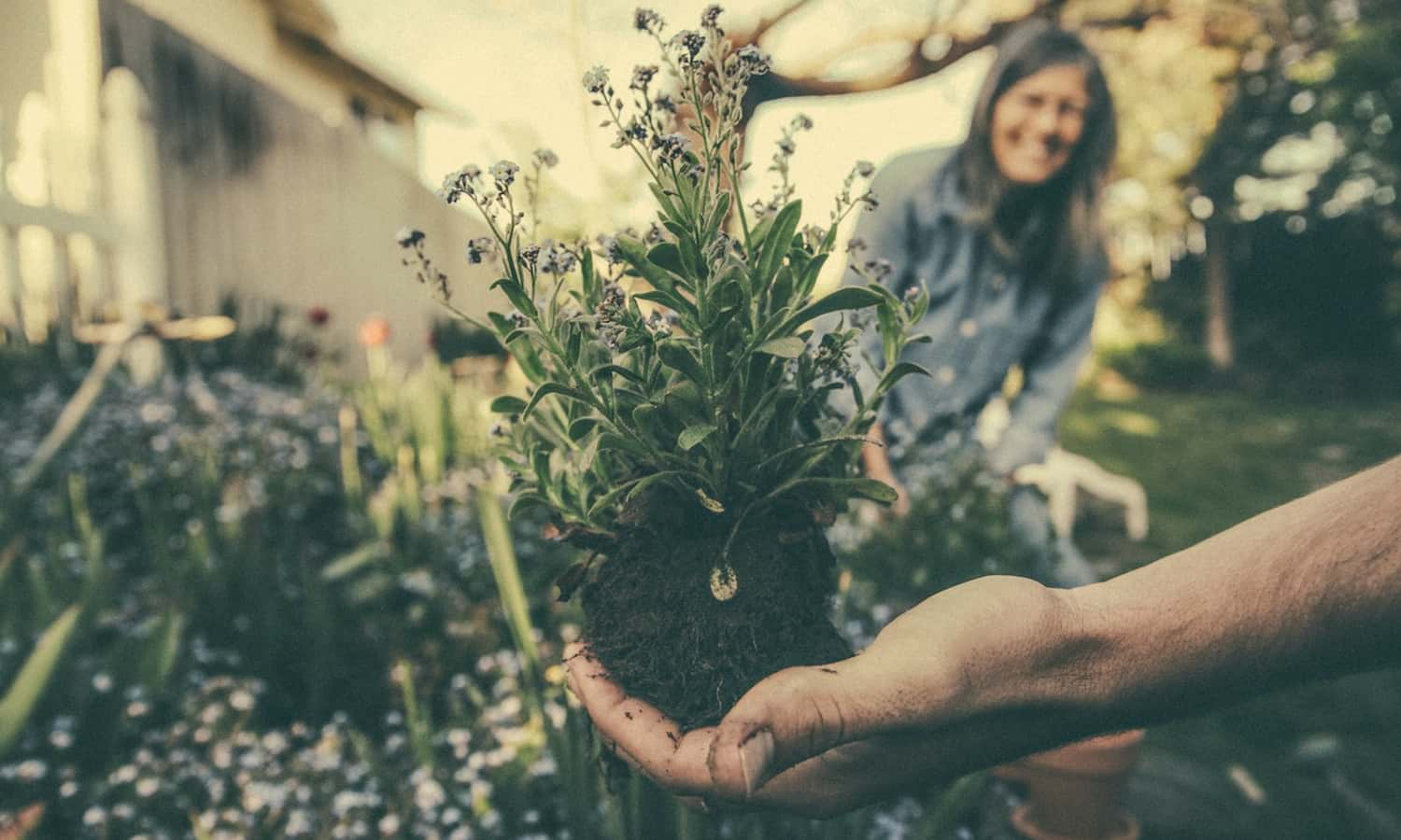 Vegetable gardening takes center stage during the pandemic, nurturing the emotional wellbeing of an increasing number of home gardeners