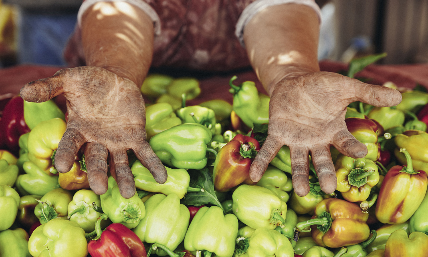 Working toward a more equitable food system, these 14 Latinx food heroes are reshaping every aspect of the food industry, from farming to education about healthy eating.