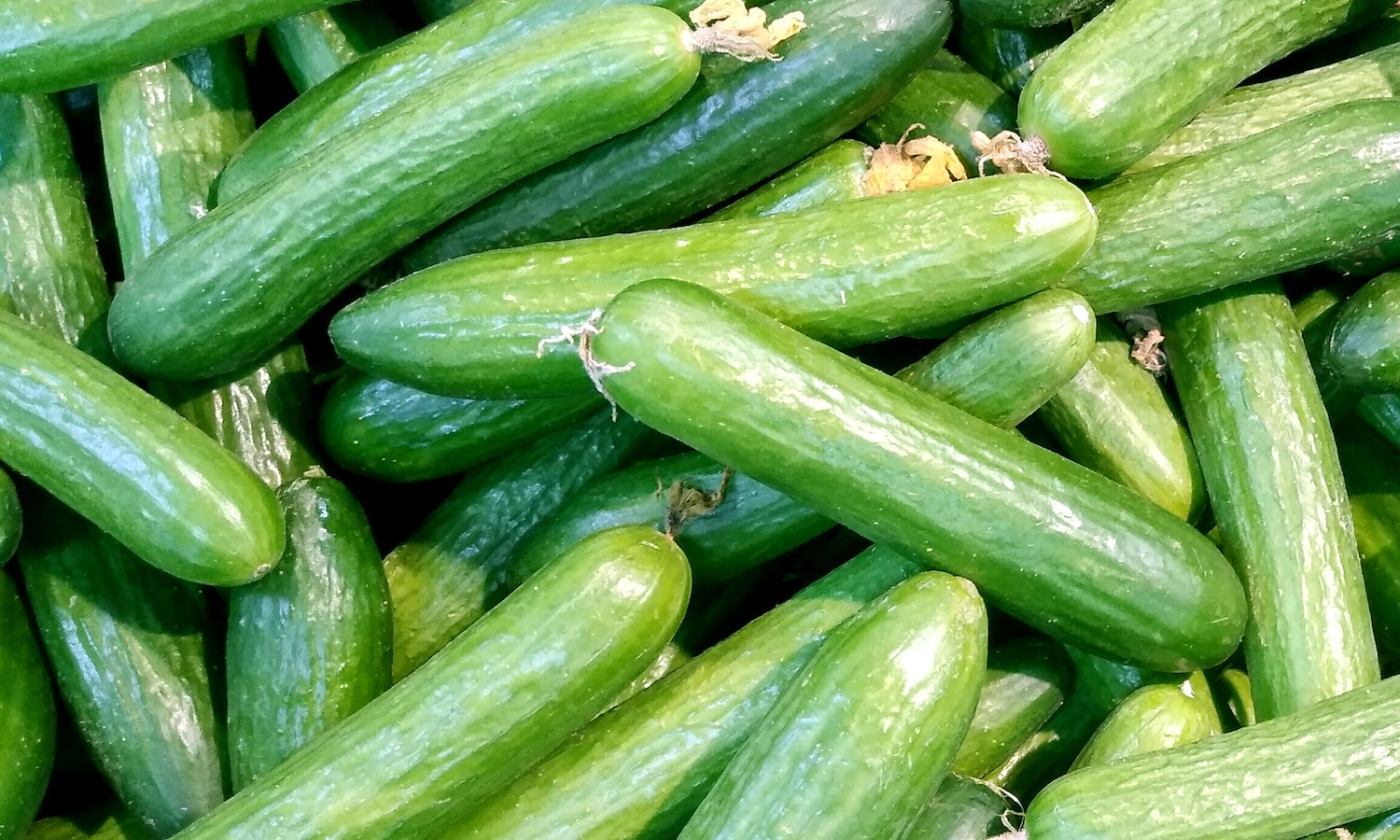 Apeel and Houweling's Group have partnered to launch plastic-free cucumbers in Walmart to increase shelf life and reduce plastic and food waste.