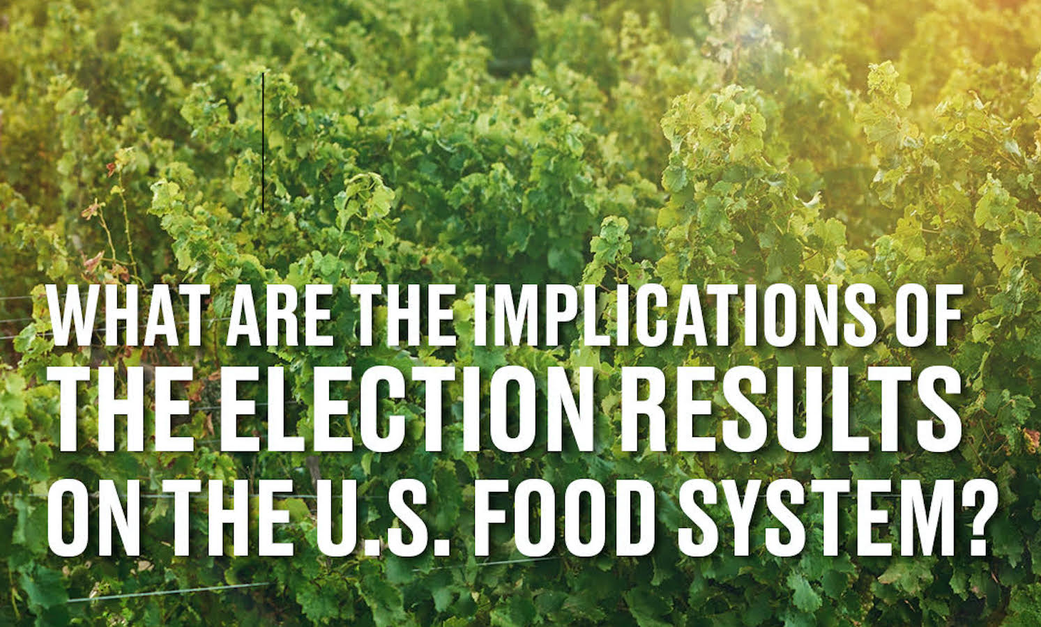 What does the election mean for the food system?