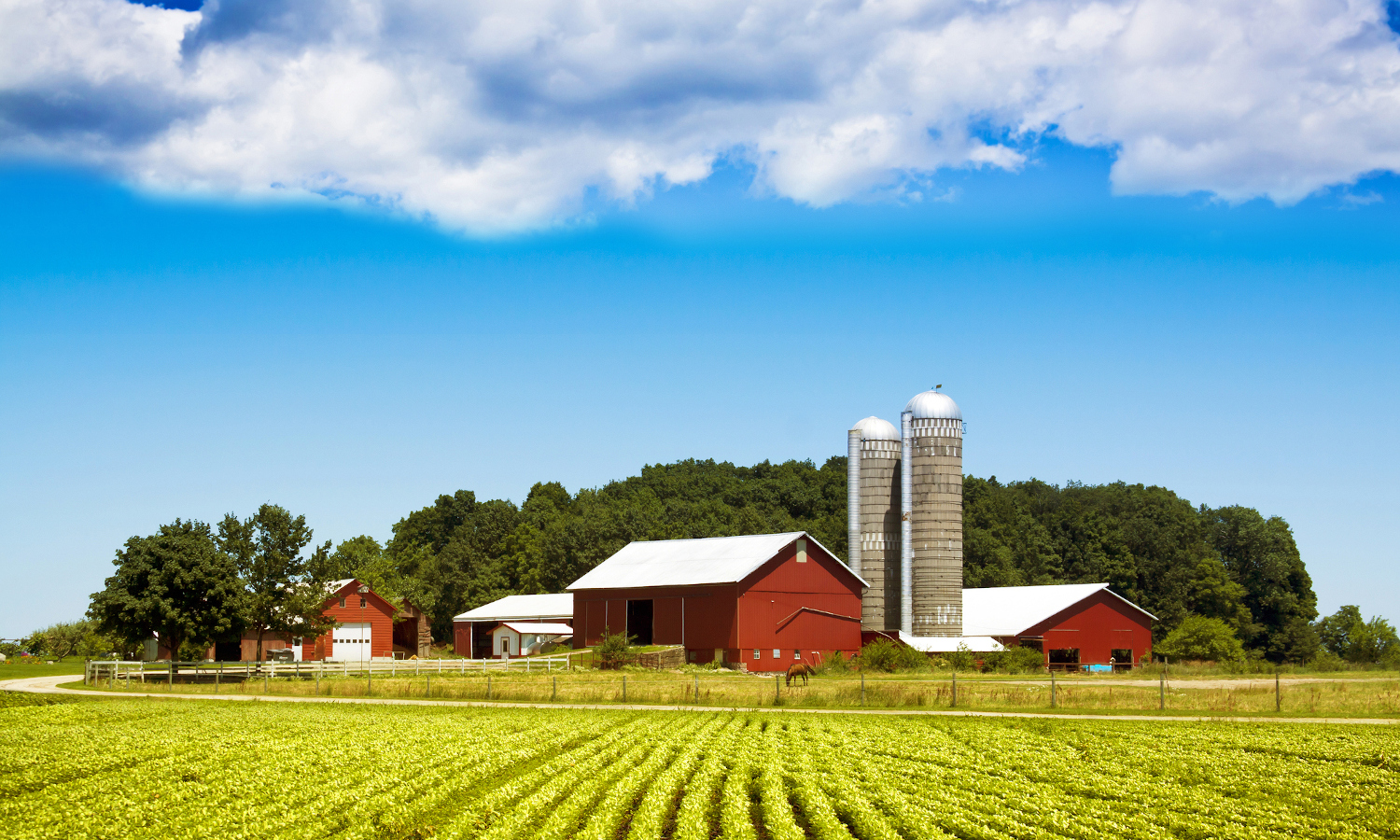 Farmers face challenges from trade wars, climate change, and COVID-19 but need more than federal payments to be sustainable long term.