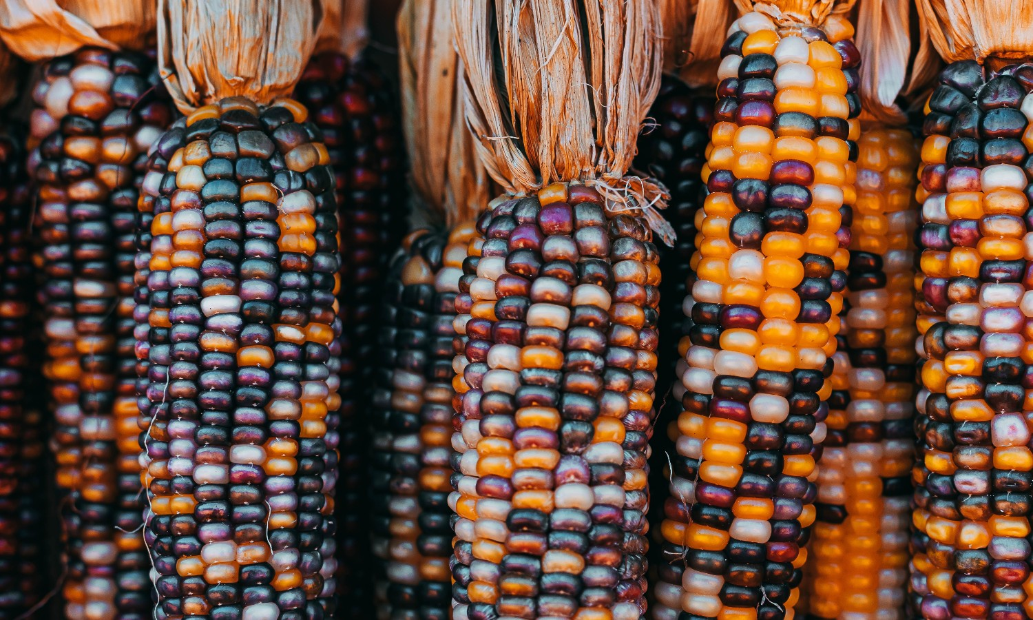 Pinole Blue, an organic blue corn company, is working to honor Mexican heritage while empowering the Rarámuri community.