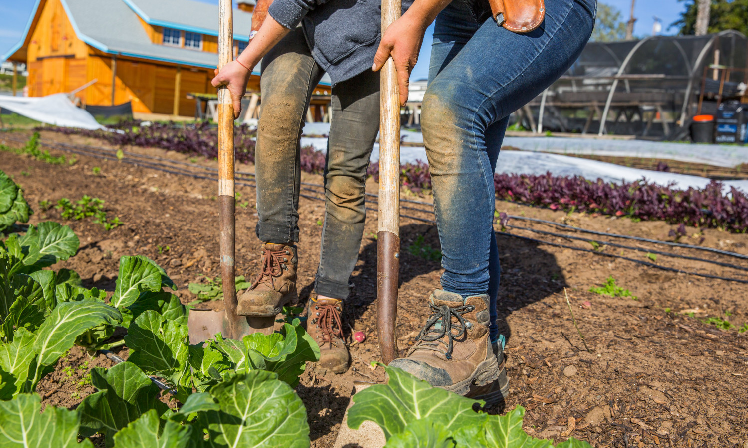 Coastal Roots Farm's new docu-film shows how the farm uses holistic, organic farming rooted in Jewish values to provide for the community and connect with the earth.
