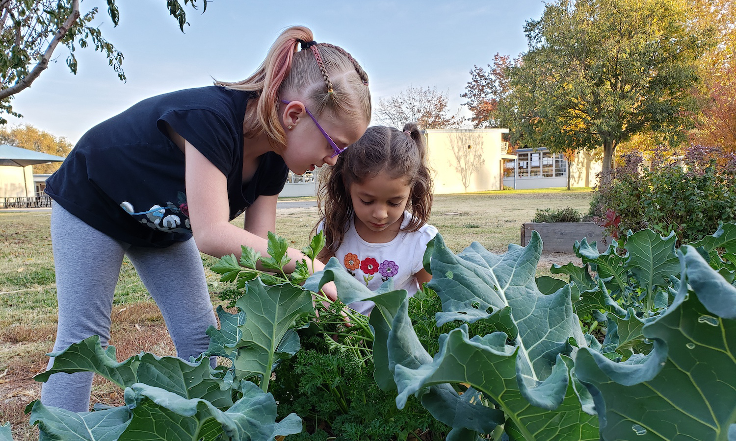 The Food Literacy Center will offer students hands-on cooking lessons from its new green classroom and garden in Sacramento.