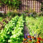 Can Climate Victory Gardens Help Solve the Climate Crisis?