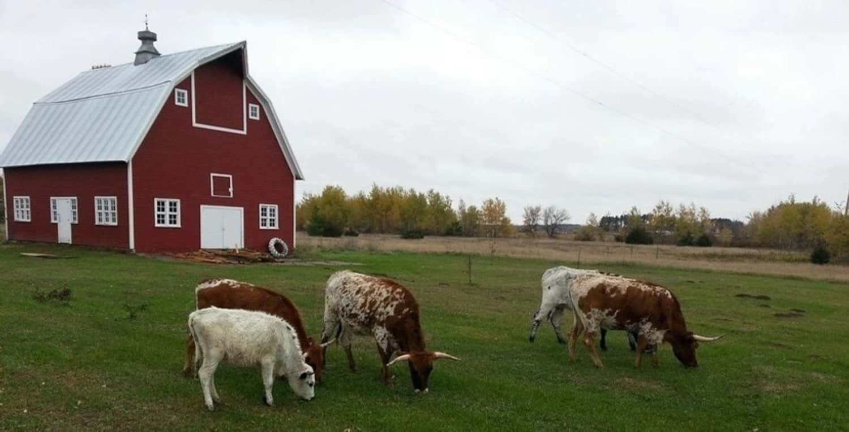 Carla Mertz, founder of Iron Shoe Farm talks about farming challenges in Minnesota.