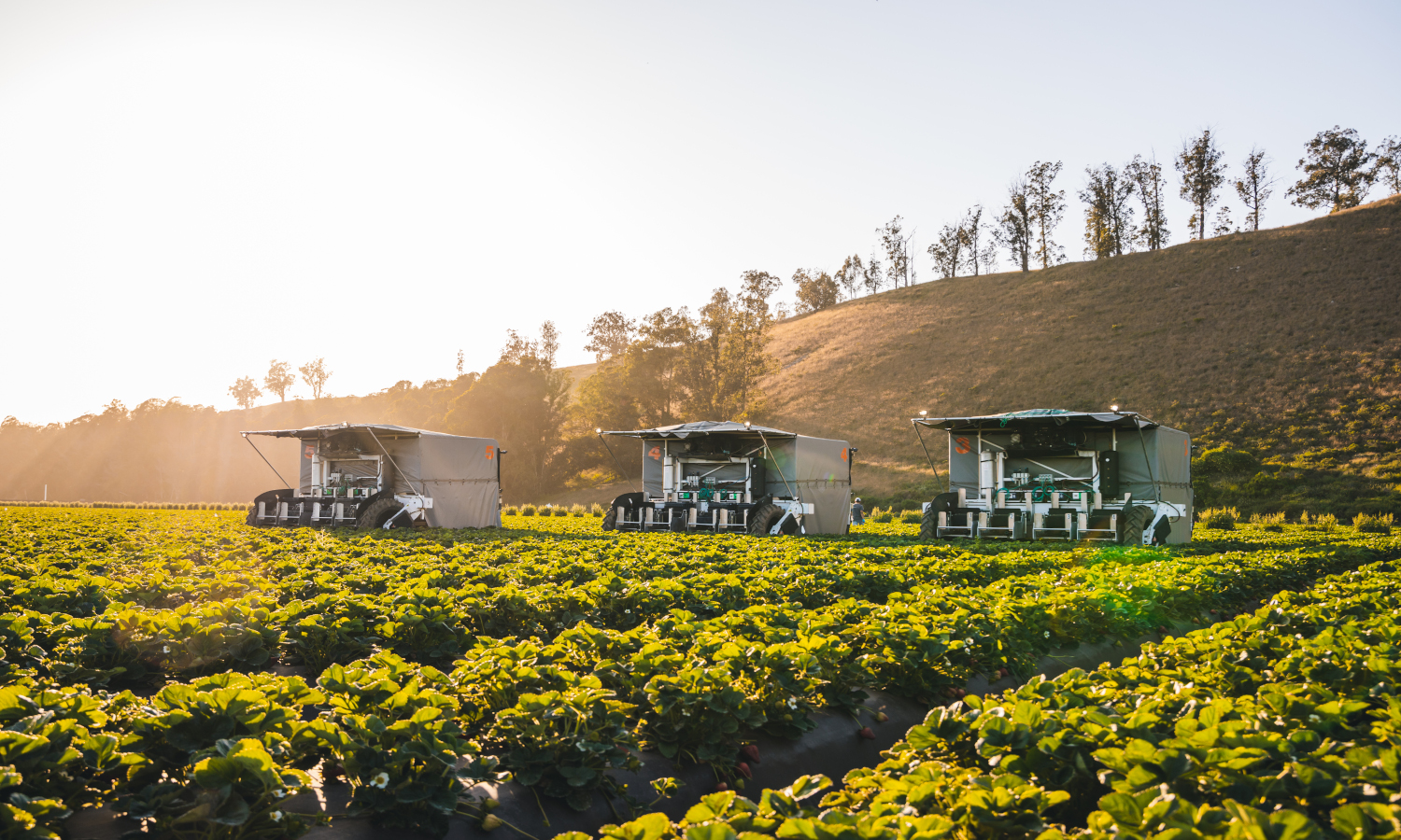 advanced.farm has created a prototype automated harvester to farm berries and could change the way berry farming is conducted.