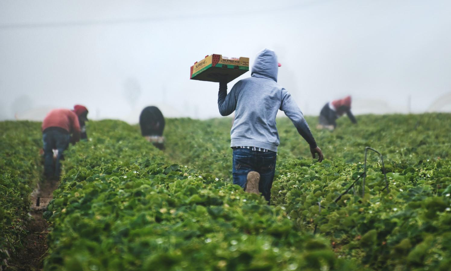 Supreme Court union farm workers