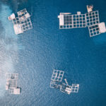 New Report Shows Sustainability in Global Aquaculture