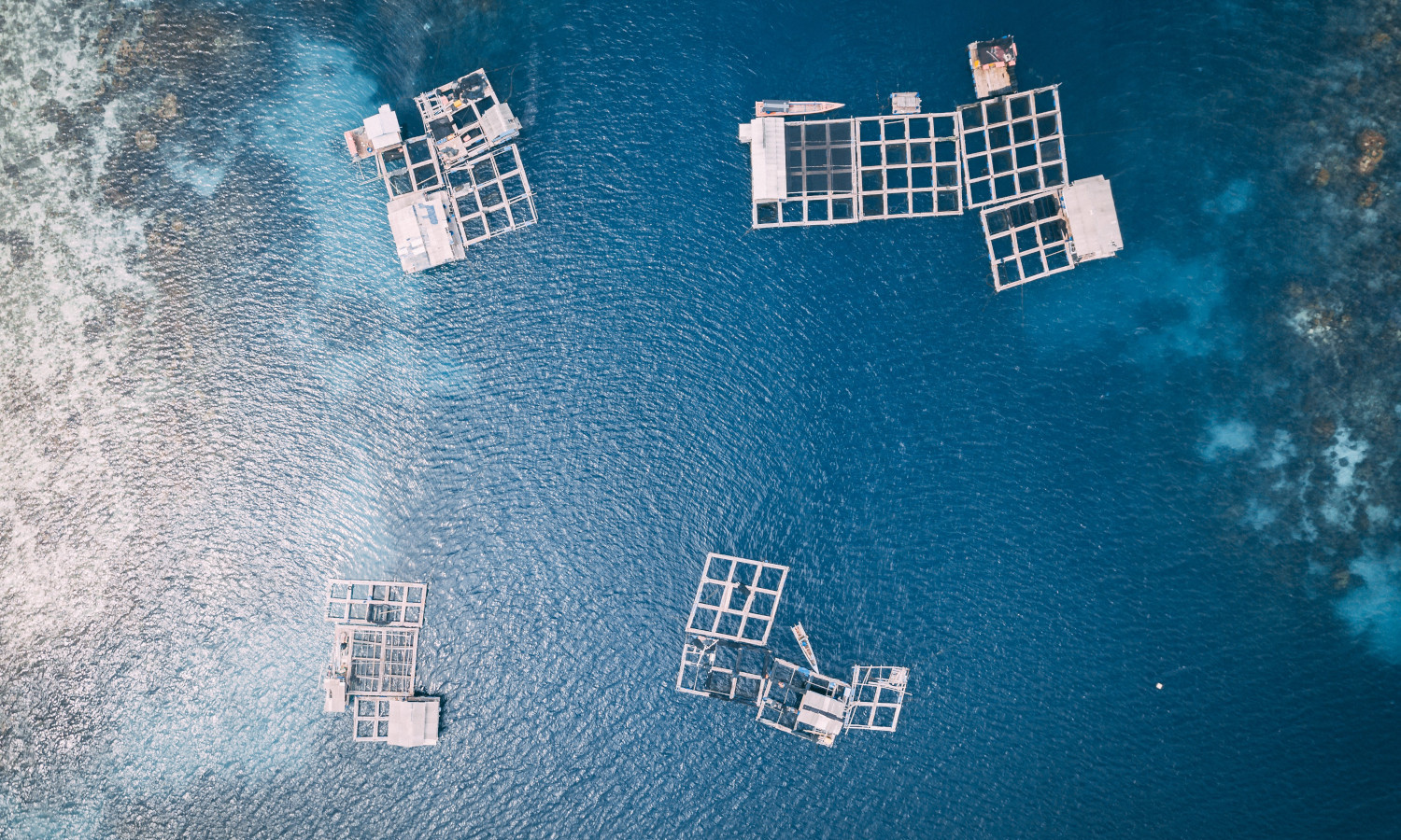 Aquaculture can help feed the world's growing population if the industry continues to embrace sustainability measures and environmental precautions.