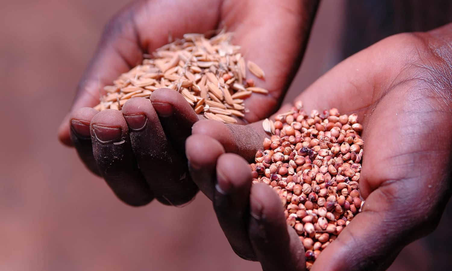 Study shows that millet consumption decreases blood glucose, helping manage diabetes.